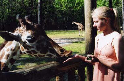 Zoo_kim_and_giraffe