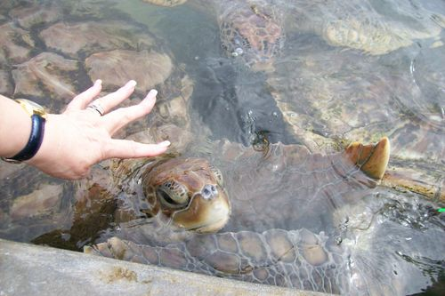 Touch the turtle Fran, dare you