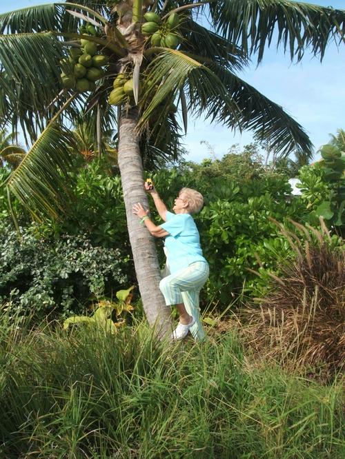 Climbing trees?